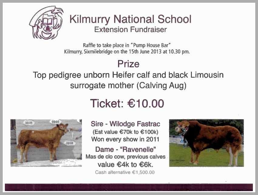 Win A Pedigree Heifer Calf with Black Limousin Surrogate Mother…